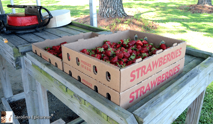 Scuppernong Produce, Strawberries
